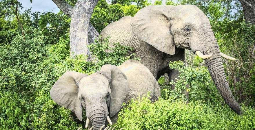 Zwei Elefanten im Wald